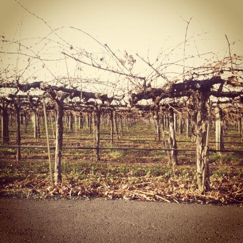 Winery Date 9